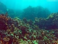 Maui Scuba